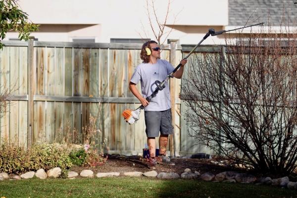 worker trimming shrub in backyard