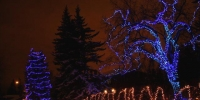 c6-led-bule-branch-wrap-and-in-spruce-tree