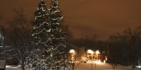 c6-led-warm-white-on-spruce-trees