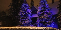 led-c6-blue-on-trees