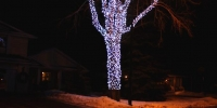 led-c6-icy-white-branch-wrap