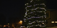led-c6-pure-white-on-tree