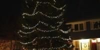 led-c6-warm-white-on-spruce-tree